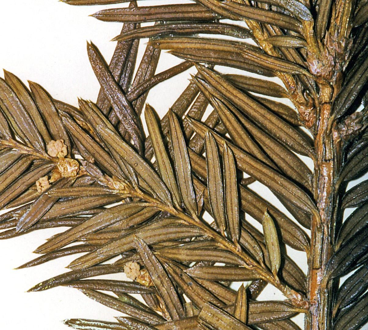wild olive pringle bay